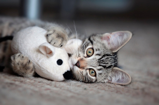 Adorable Kitten With Toy Mouse Wallpaper for 2880x1920