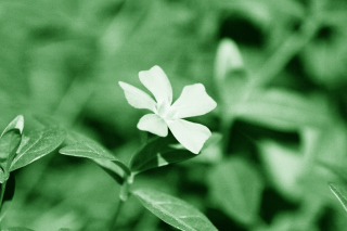 Free White Flower Picture for 1440x900