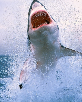 Shark Attack Background for Nokia C1-01