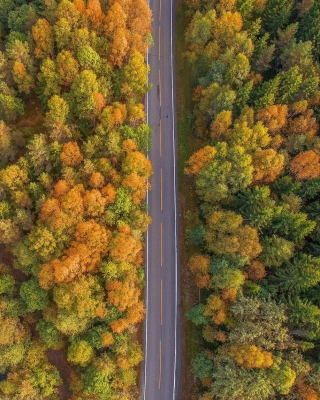 Drone photo of autumn forest Picture for iPhone 5