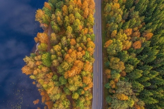 Drone photo of autumn forest - Obrázkek zdarma pro Widescreen Desktop PC 1600x900
