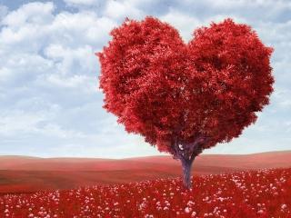 Heart Tree for Nokia Asha 200