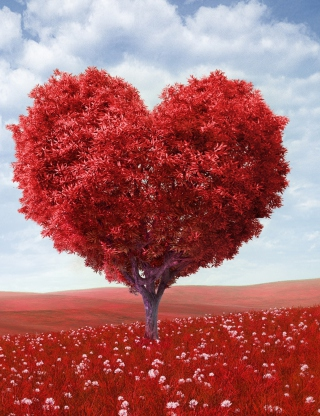 Heart Tree Background for Nokia C1-01