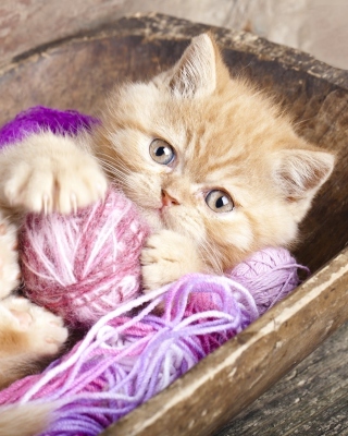 Cute Kitten Playing With A Ball Of Yarn - Obrázkek zdarma pro 128x160
