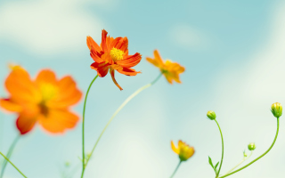 Free Orange Summer Flowers Picture for Android, iPhone and iPad