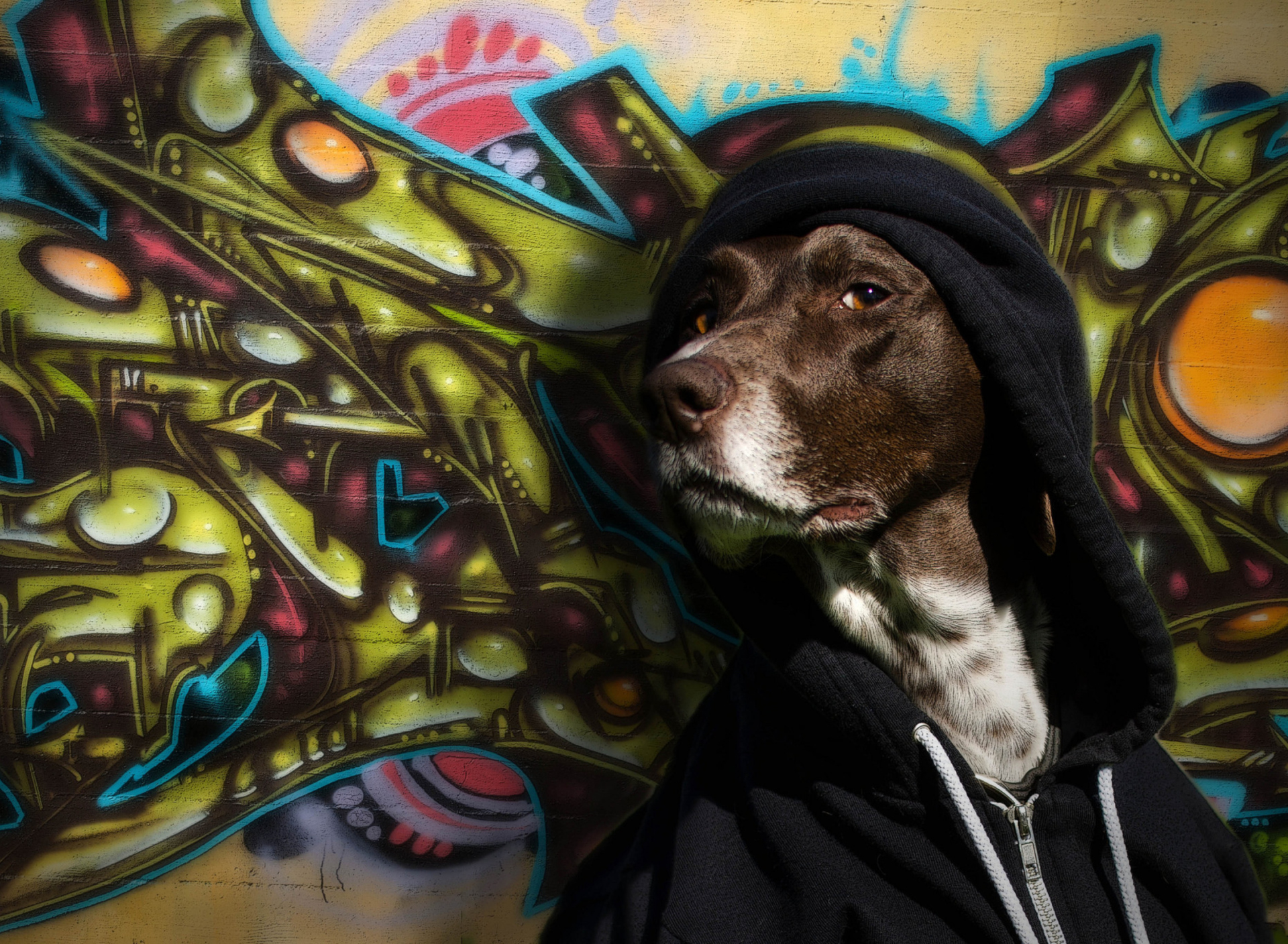 Screenshot №1 pro téma Portrait Of Dog On Graffiti Wall 1920x1408