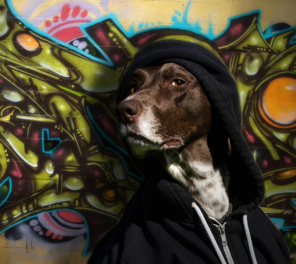 Screenshot №1 pro téma Portrait Of Dog On Graffiti Wall 960x854