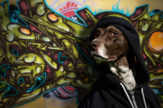 Portrait Of Dog On Graffiti Wall sfondi gratuiti per 1920x1408