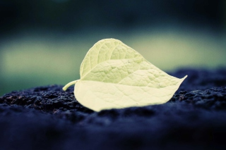 Free Single Yellow Leaf Picture for Android, iPhone and iPad