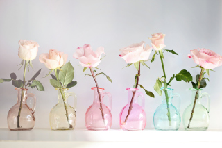 Roses In Vases sfondi gratuiti per cellulari Android, iPhone, iPad e desktop