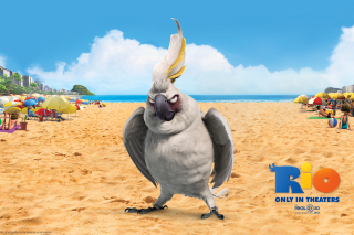 Free Nigel Parrot From Rio Picture for Android, iPhone and iPad