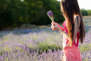 Girl With Field Flowers Wallpaper for Android, iPhone and iPad