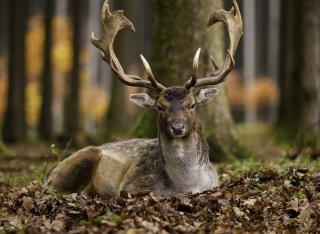 Most Beautiful Deer Background for Android, iPhone and iPad