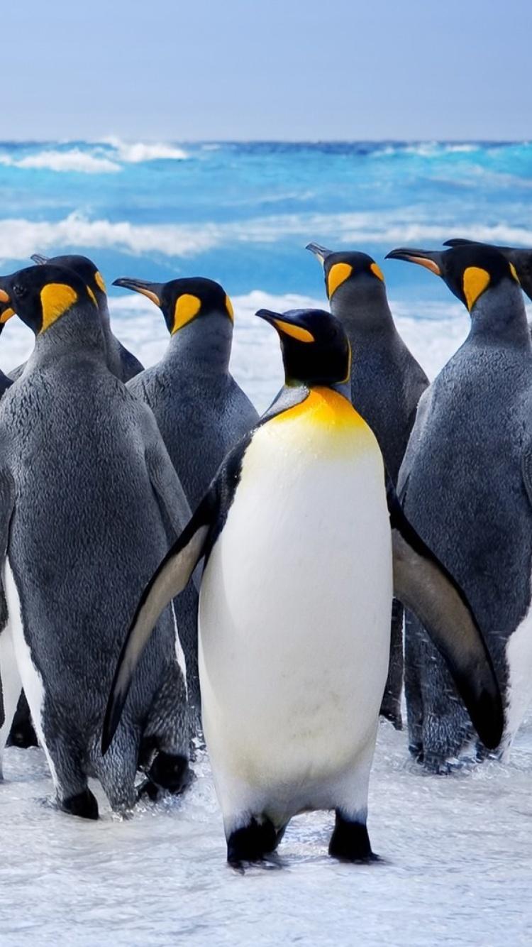 строительные пингвин картинка на телефон организовать