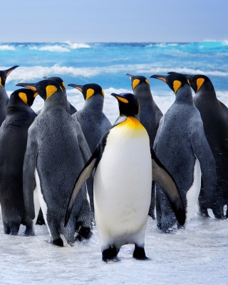 Royal Penguins Background for iPhone 6
