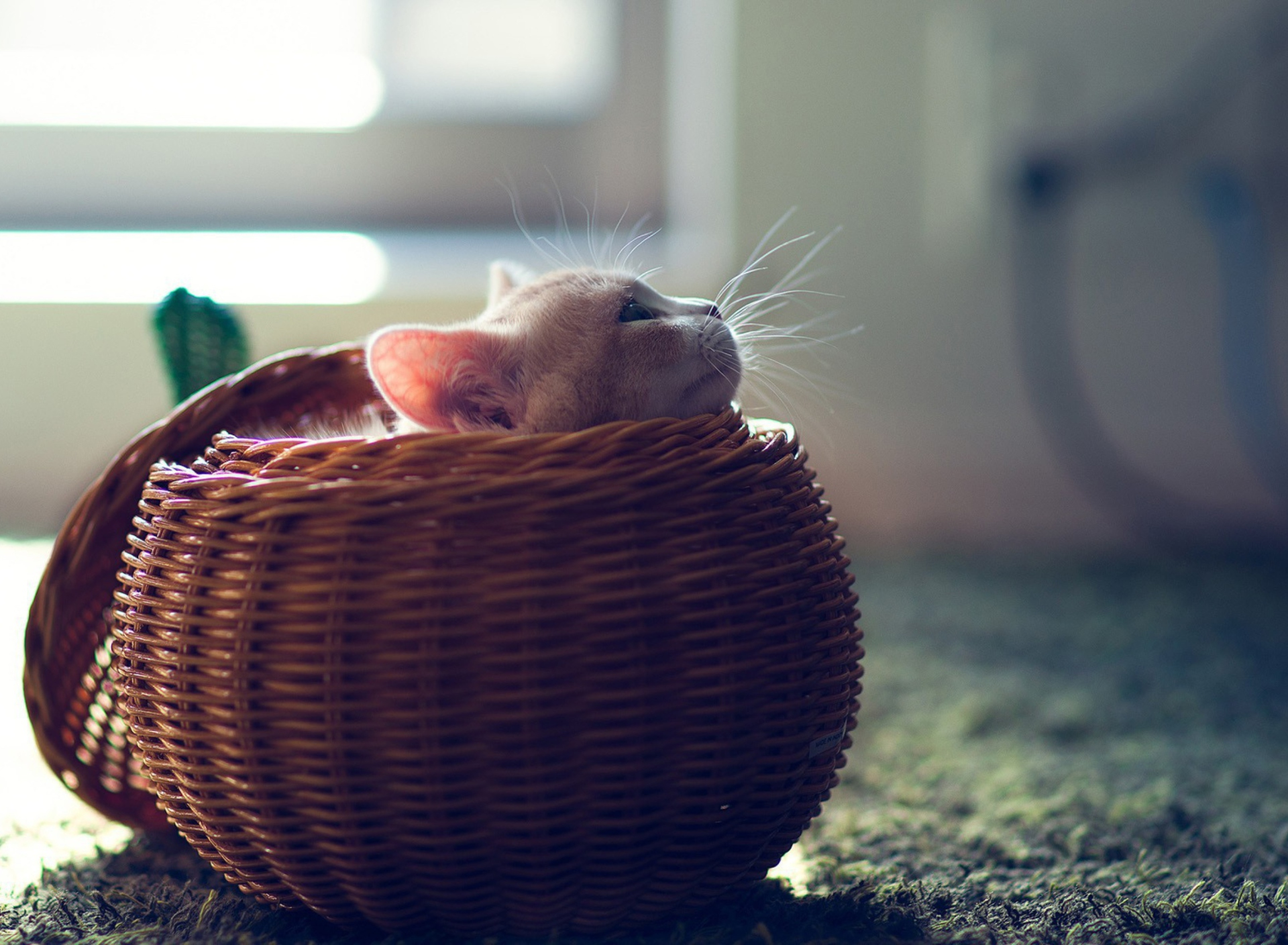 Screenshot №1 pro téma Cute Kitten In Basket 1920x1408