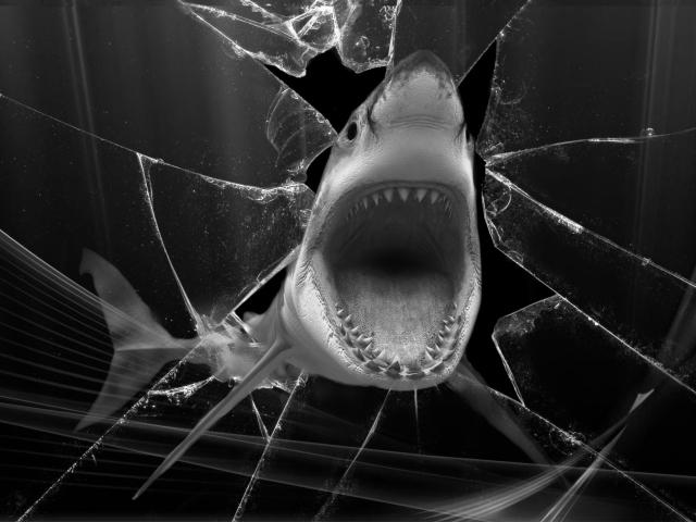 Shark para Sony Ericsson XPERIA X8