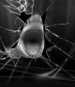 Shark Picture for HTC Titan