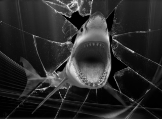 Shark Picture for Android, iPhone and iPad