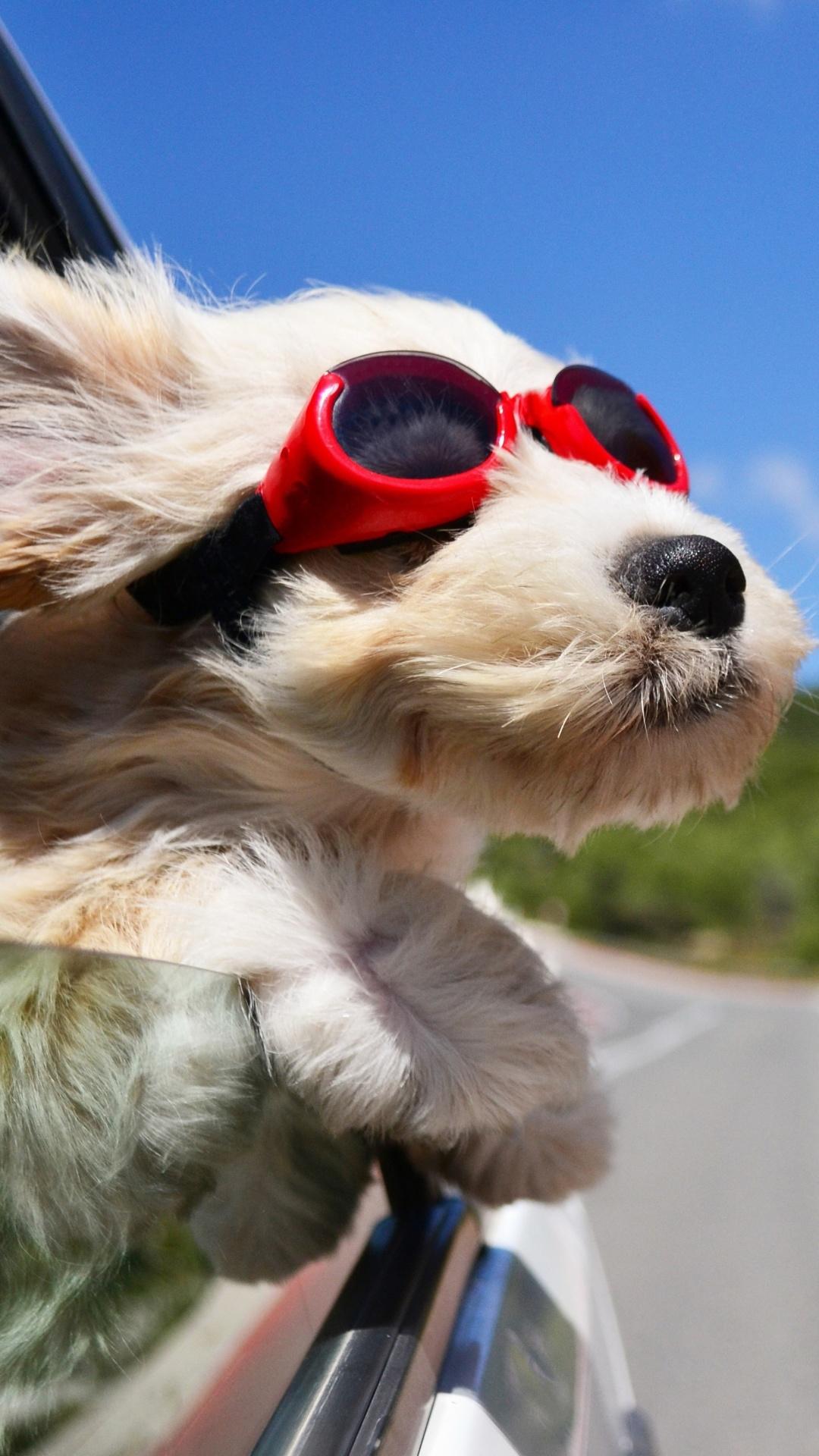 Прикольные картинки с собаками на телефон, сделать открытку для