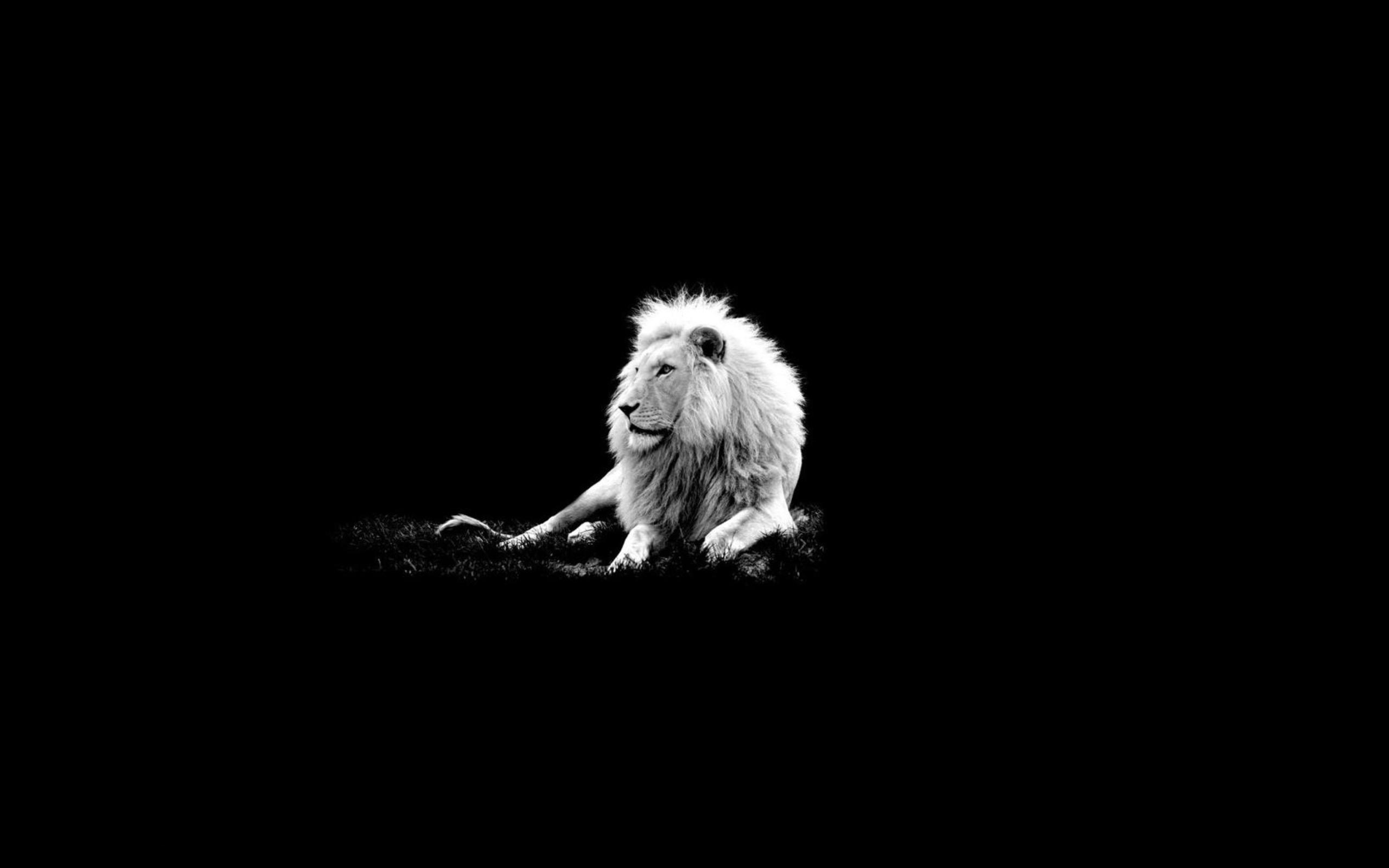 Лев на черном фоне без смс