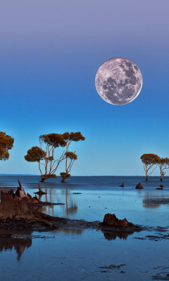 Screenshot №1 pro téma Moon Landscape in Namibia Safari 240x400
