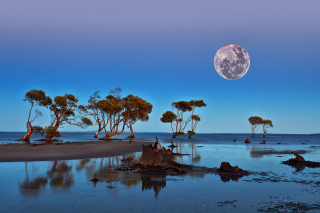 Free Moon Landscape in Namibia Safari Picture for Android, iPhone and iPad