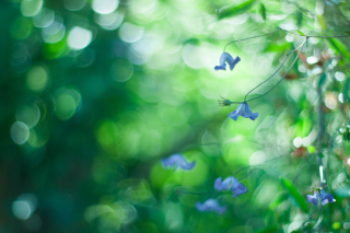 Blue Flowers Macro And Beautiful Bokeh sfondi gratuiti per cellulari Android, iPhone, iPad e desktop