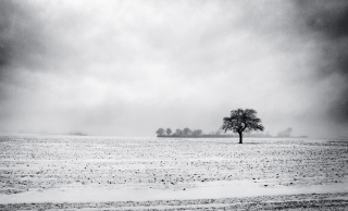 Black And White Winter - Obrázkek zdarma