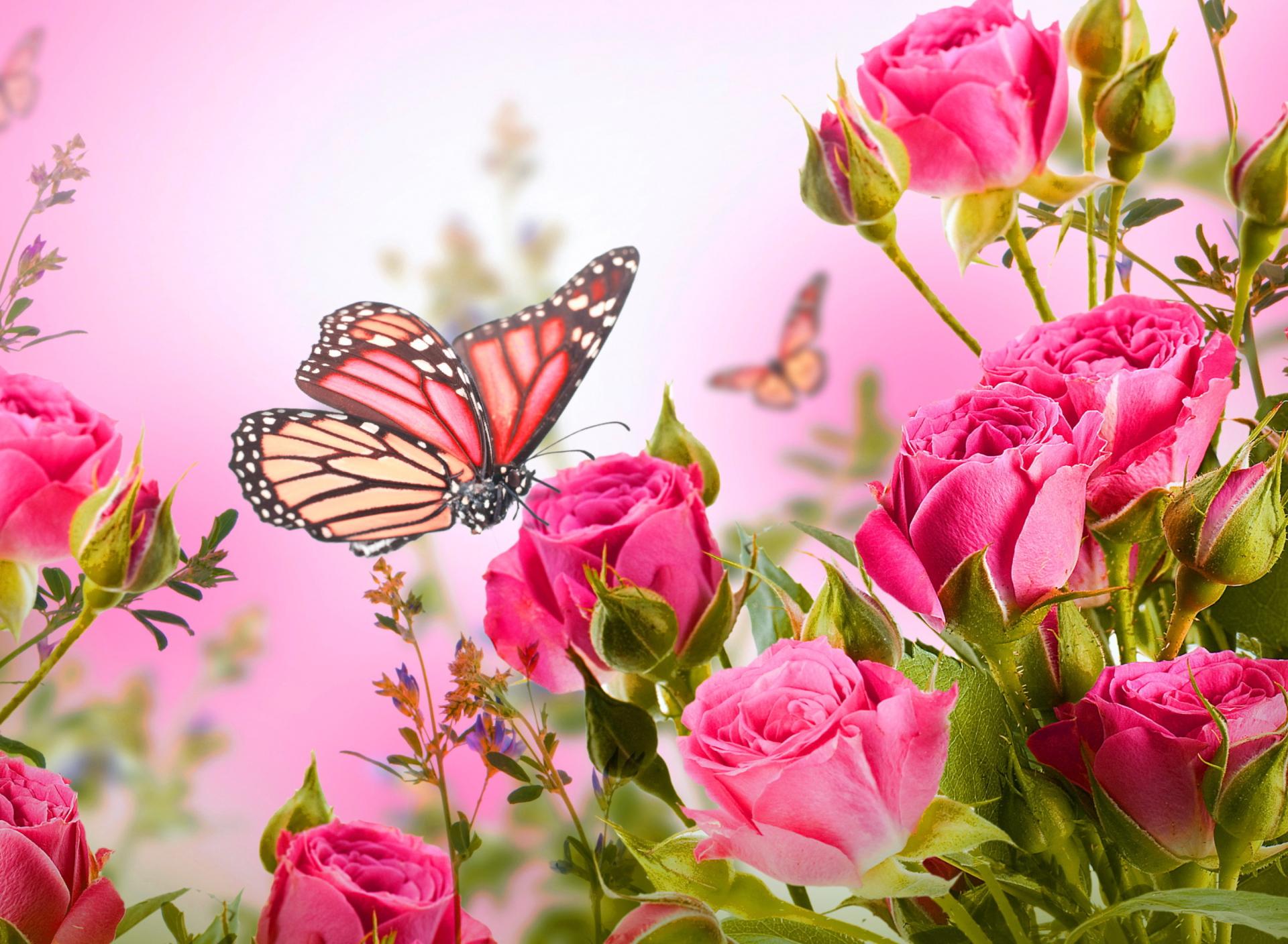 Картинке сделать, картинки розы на телефон на заставку