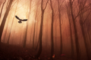 Dark Owl In Dark Forest Wallpaper for Android, iPhone and iPad
