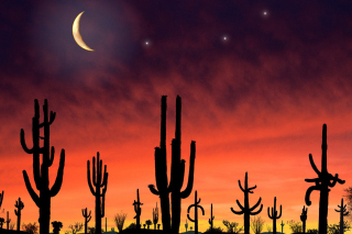 Saguaro National Park in Arizona Picture for Android, iPhone and iPad
