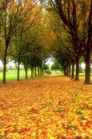 Screenshot №1 pro téma Autumn quiet park 320x480