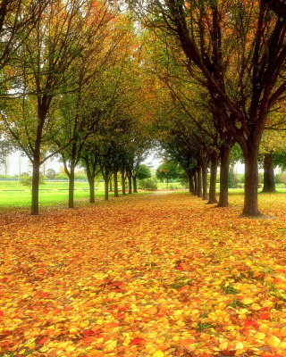 Autumn quiet park Background for iPhone 5S