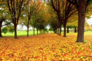 Autumn quiet park Background for Android, iPhone and iPad