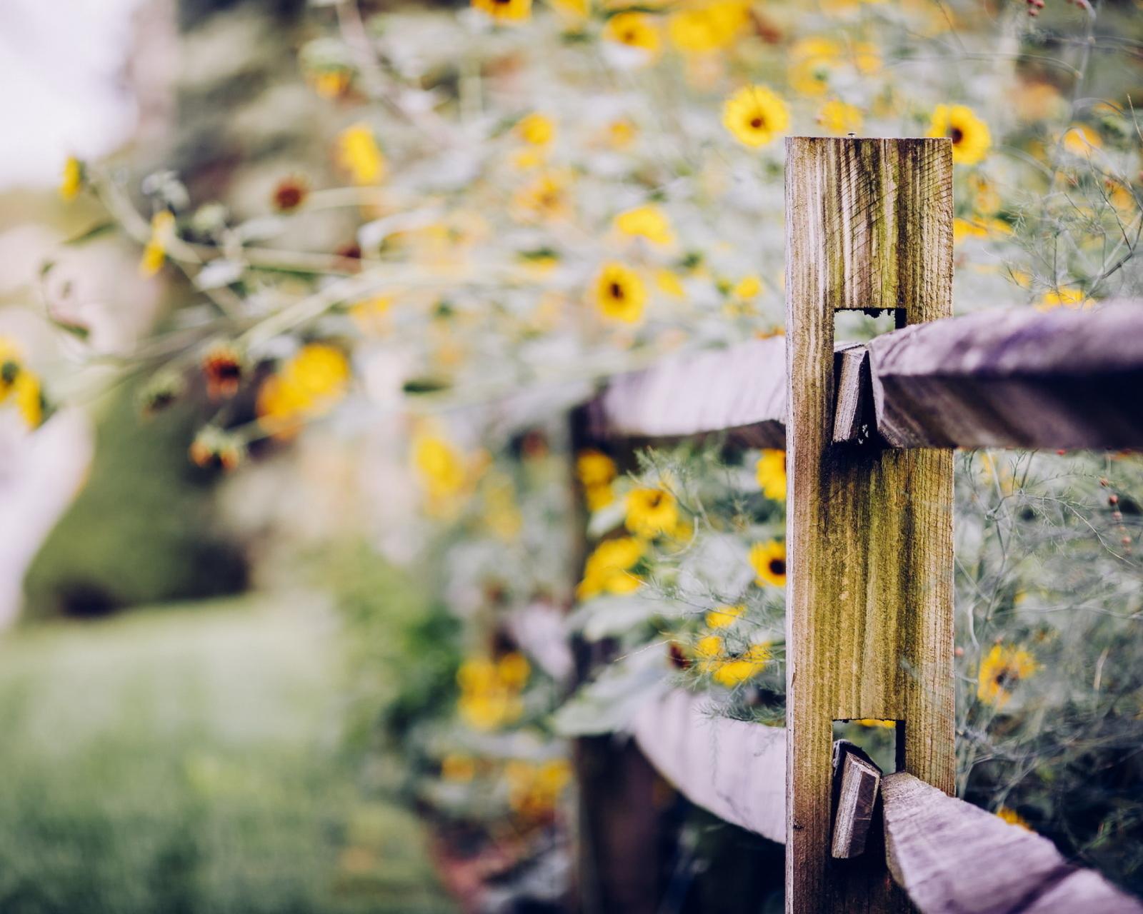 Желтые цветы под забором без смс