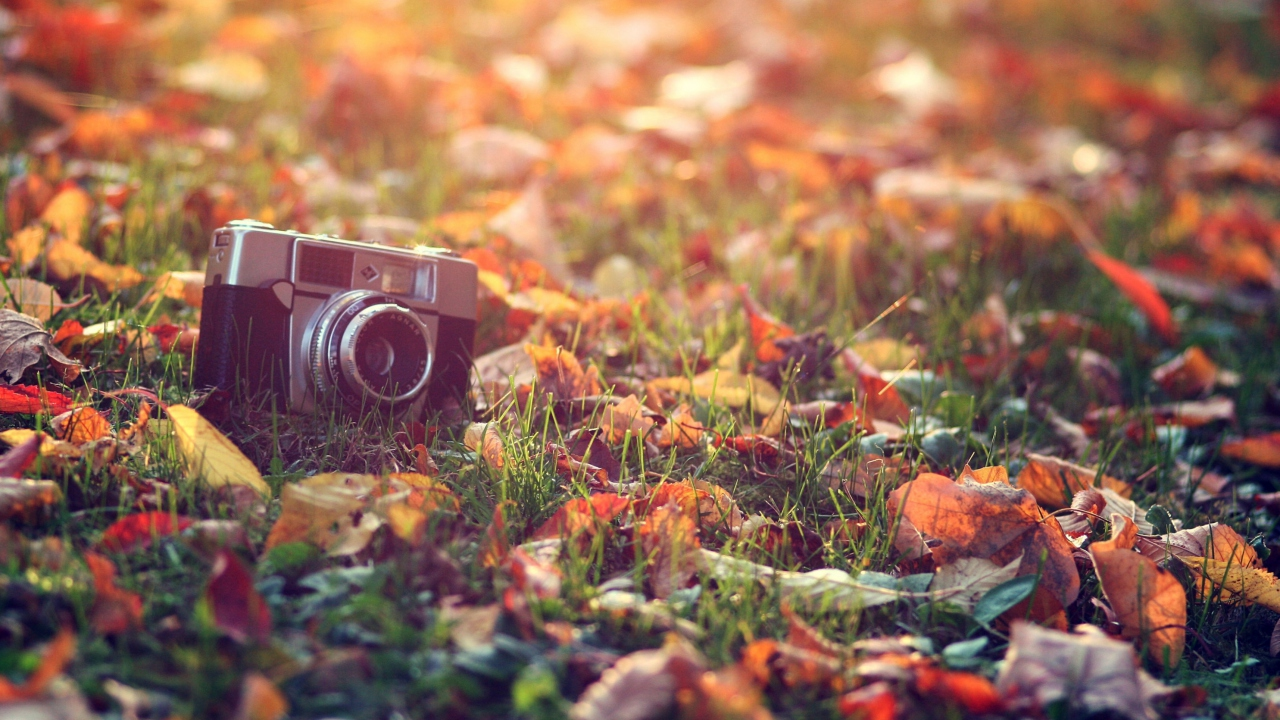 Old Camera On Green Grass And Autumn Leaves