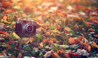 Old Camera On Green Grass And Autumn Leaves Background for Android, iPhone and iPad