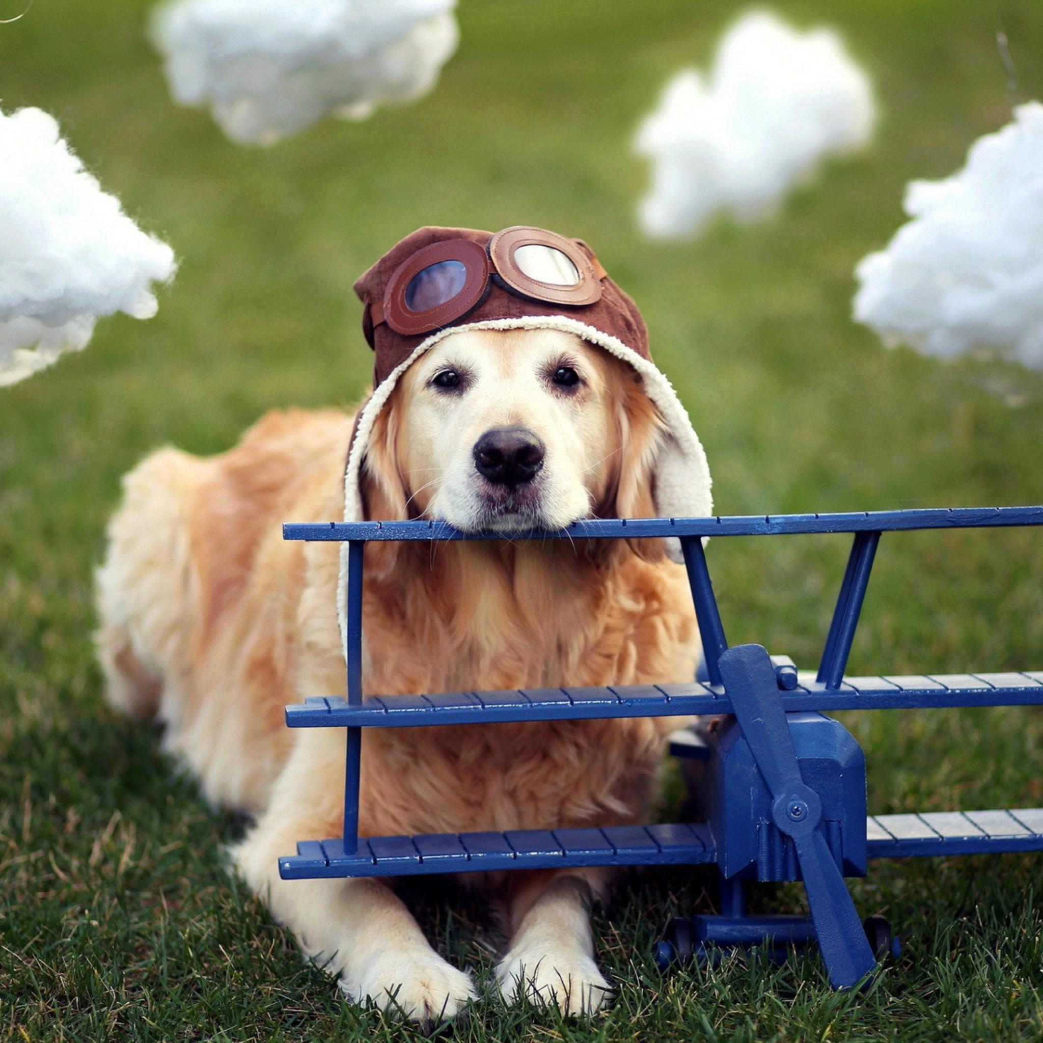 Собака с моделькой самолета скачать