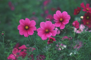 Bright Pink Flowers sfondi gratuiti per cellulari Android, iPhone, iPad e desktop