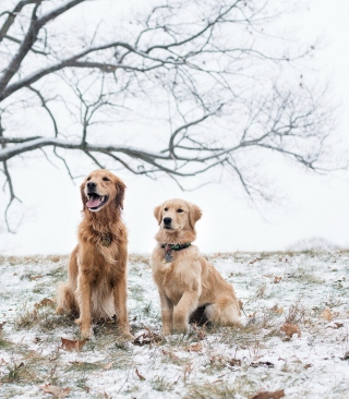 Two Dogs In Winter - Fondos de pantalla gratis para 640x960