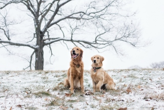 Картинка Two Dogs In Winter для андроида