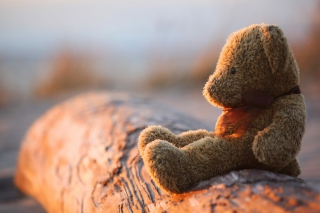 Lonely Teddy Bear Picture for Android, iPhone and iPad