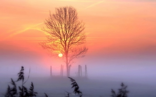 Sunset And Mist Wallpaper for Fullscreen Desktop 1024x768