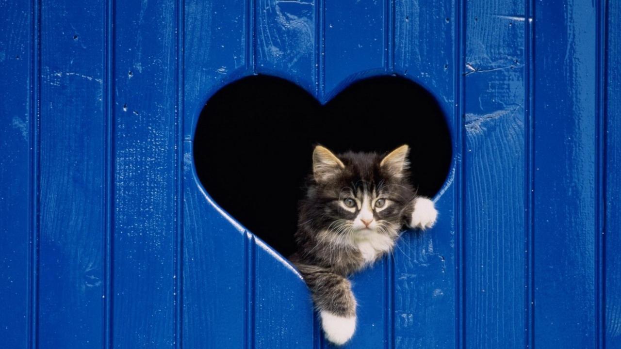 Cat In Heart-Shaped Window