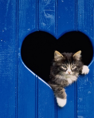 Free Cat In Heart-Shaped Window Picture for iPhone 6 Plus