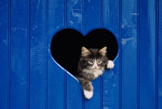 Cat In Heart-Shaped Window Wallpaper for Android, iPhone and iPad