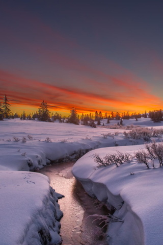 Das Snow Landscape Wallpaper 320x480