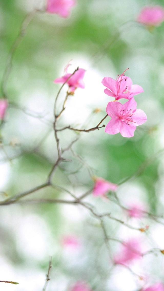 Нежные картинки на телефон цветы это