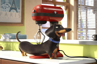 Kostenloses The Secret Life of Pets Wallpaper für Android, iPhone und iPad